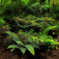Ferns Of The Forest by Mike Eingle