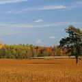 Field by Bert Mailer