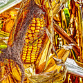 Field Corn Ready For Harvest by Roger Passman