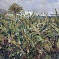 Field Of Banana Trees by Auguste Renoir