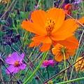Field Of Flowers by Debra Lynch