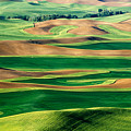 Field Of Green by Eggers Photography