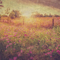 Field Of Pink by Tim Wemple