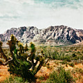 Field Yucca by Paul Tokarski