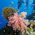 Fiji Underwater by Dave Fleetham - Printscapes