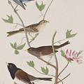 Finches by John James Audubon