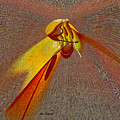 Firefly by Iris Gelbart