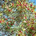 Firethorn Tree by Maxine Billings