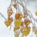 First Snow by Anita Raunio