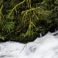Fishhawk Creek by Robert Potts