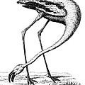 Flamingo by Granger