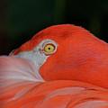 Flamingo by Mary Ellen Urbanski