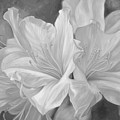 Fleurs Blanches - Black And White by Lucie Bilodeau