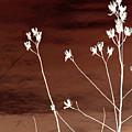 Floral by Amanda Barcon
