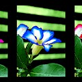 Floral Triptych by Bruce Nutting