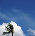 Florida Clouds by Susanne Van Hulst