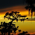 Central Florida Sunset by David Lee Thompson