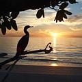 Florida Sunset by Sharon Kotula