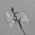 Flower 8-12 by Skip Willits