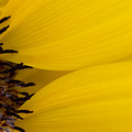 Flower Abstract by Ray Laskowitz - Printscapes