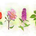 Flower Background by Svetlana Foote