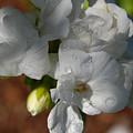 Flower Bouquet by Carol  Eliassen