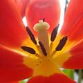 Flower by Carlos Kogl