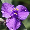 Flower by Heidi Poulin