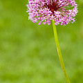 Flower by Sebastian Musial