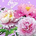Flowers Image by MSA Siddiqui