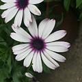Flowers by Joel Baugh