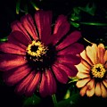 Flowers Lighting Up The Darkness by Debra Lynch