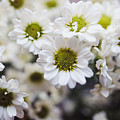 Flowers by Michael Nau