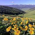 Spring In The Mountains by Jack Bell