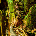 Flume Gorge by Sherman Perry
