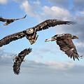 Flying Eagles by Robert Mullen