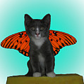 Flying Kitty by Donna Brown