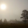 Fog In The Sandhills by Eric Abernethy