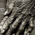 Old Hands by Skip Nall