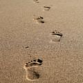 Follow The Leader by Jason Blalock
