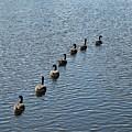 Follow The Leader by Linda Benoit