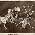 Fool's Folly by Francisco Goya