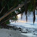Forest Beach by Michael Scott