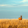Fort Peck Buck by Todd Klassy