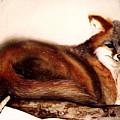 Fox  by Kay Robinson