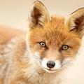 Foxy Face by Roeselien Raimond