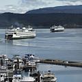Friday Harbor by Bob Stevens