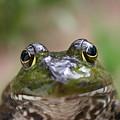 Frog by David Paul Murray