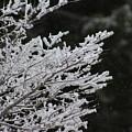 Frozen Branches by LKB Art and Photography
