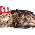 Funny Grumpy Christmas Cat by Susan Schmitz